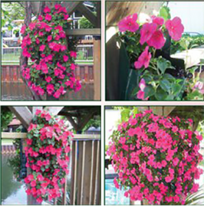 Examples of Generation 2 Flower Pouches for hanging flowers against walls, fences, and more.