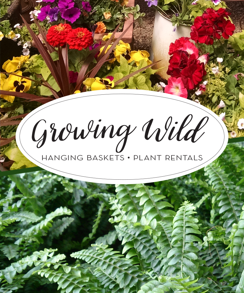 Growing Wild Greenhouse - Flowering hanging baskets and plant rentals in Idaho