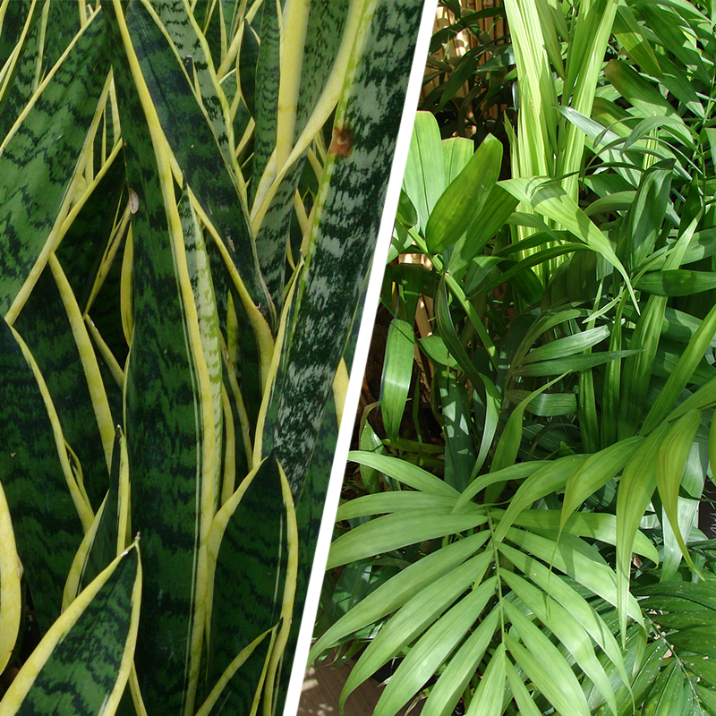 Growing Wild Greenhouse Plant Rentals - Palm fronds and Sansevieria