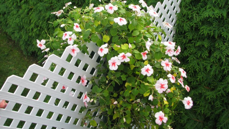 A saddle-style flower pouch on both sides of a fence